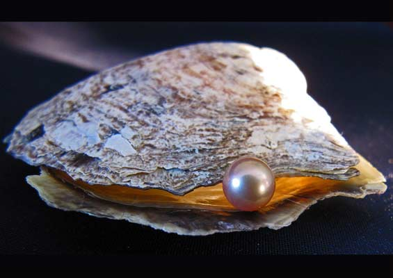 Read more about the article How Pearls formed