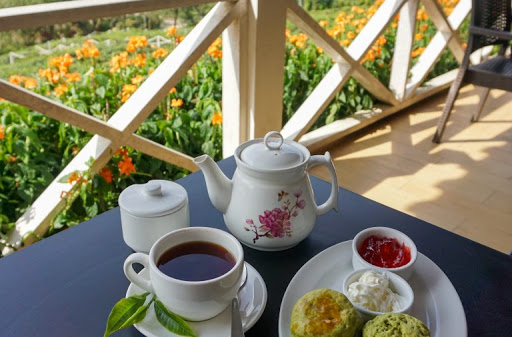 You are currently viewing Sabah Tea of Kota Kinabalu which came from the same origin of plantation protects the tea quality and aroma!