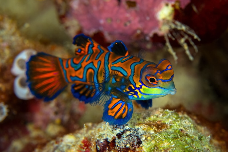 Read more about the article The Best Place To Go Scuba Diving is Borneo!