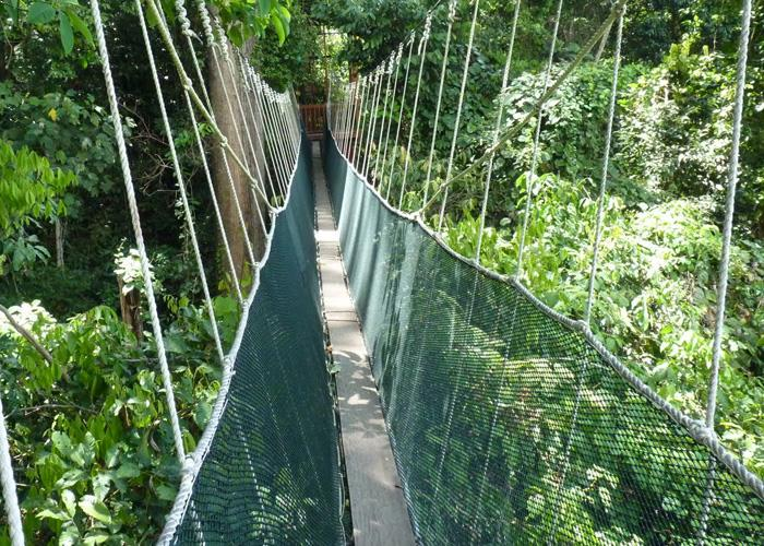 You are currently viewing Poring Canopy Walkway, the highest in Sabah