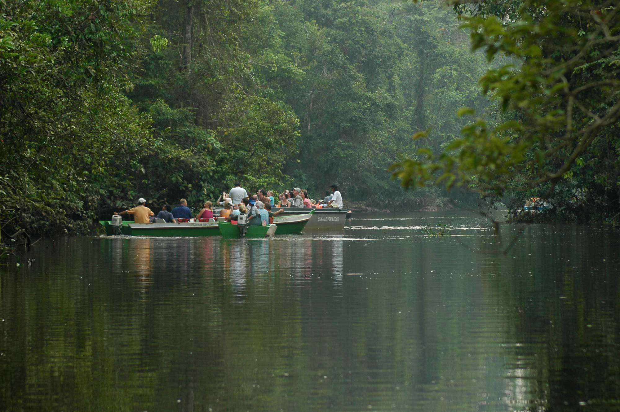 Read more about the article Discover the Charms of the Kinabatangan River, the Longest River in Sabah