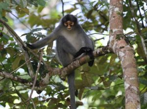 Read more about the article Tabin Wildlife Reserve is the place to be to observe wildlife