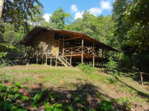 Read more about the article Lubok Kasai Jungle Experience and Lodge for the city folks wanting a nature gateaway