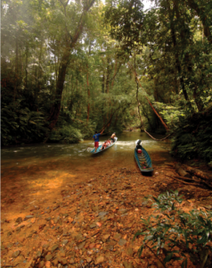 Read more about the article Batang Ai, The Cultural Traditions & Rainforest of Borneo