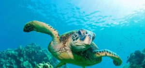 Read more about the article Diving to see the turtles at Sipadan Island